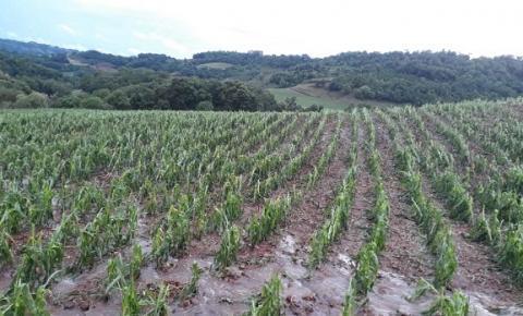 Chuva de granizo causa prejuízos em lavouras do Município de Três Passos