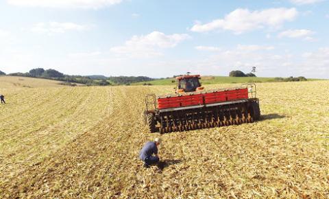 Plantio do trigo na região chega a 35%